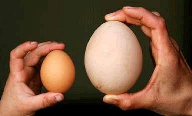 Thực hư chuyện mẹ bầu ăn nhiều trứng ngỗng sẽ sinh con thông minh